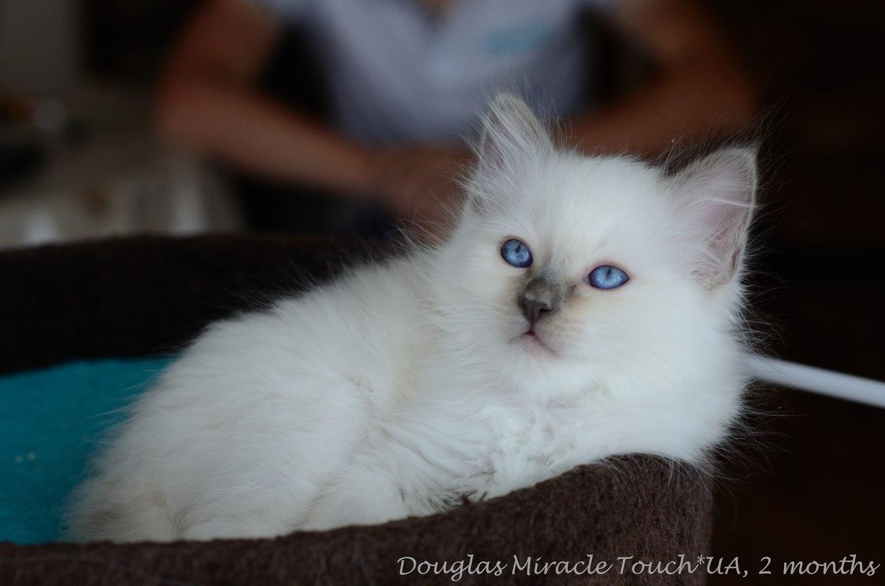 Дуглас, 2 месяца