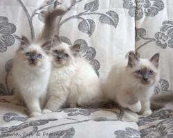 Фрида, Фифи и Фатима.jpg