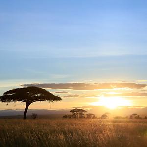 Serengeti3, Tanzania