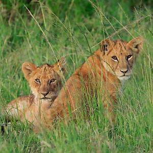 Serengeti2, Tanzania