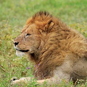 Ngorongoro1, Tanzania