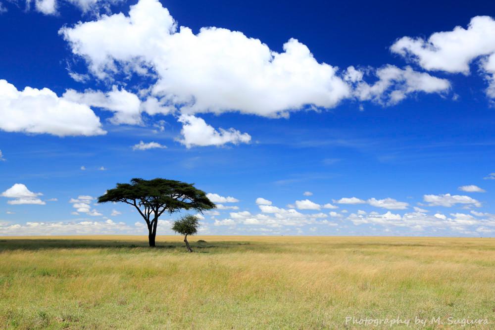 ンゴロンゴロ国立公園のライオン