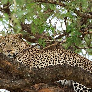 Serengeti1, Tanzania