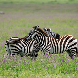 Ngorongoro2, Tanzania