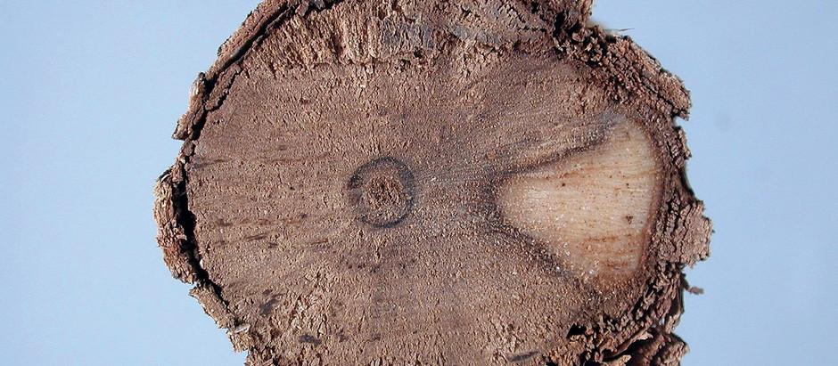Doenças do tronco