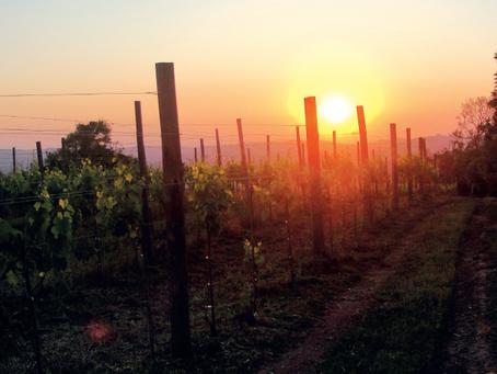 Em busca do vinho natural