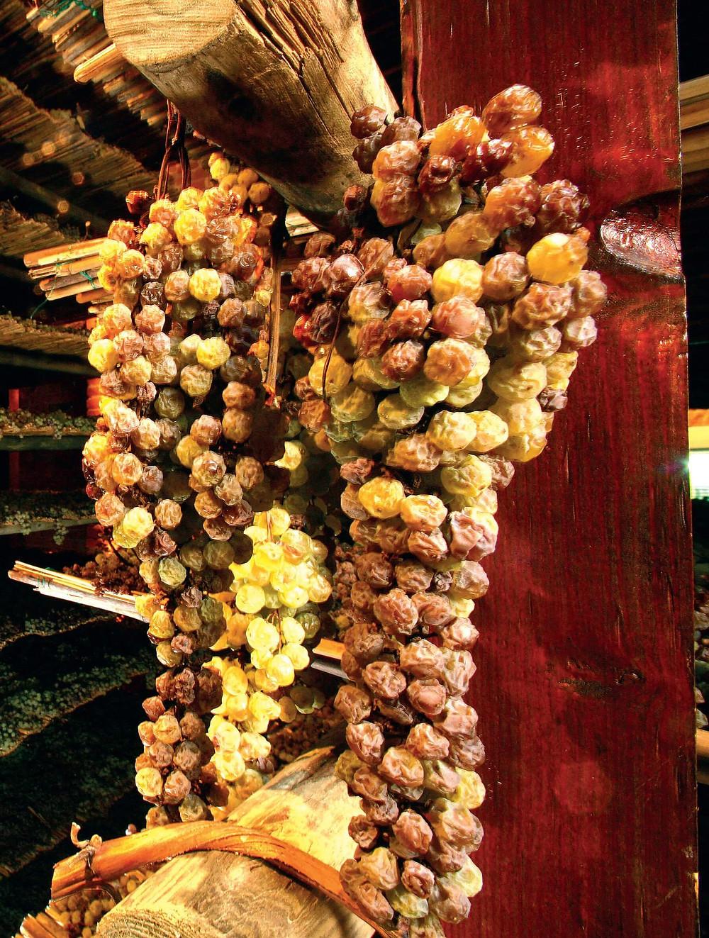 Uvas postas a secar na Toscana –em Montepulciano– para fazer vin santo