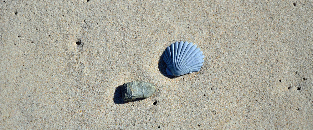 Shells_GA2015.jpg