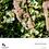 Thumbnail: 30-Minute Keto Recipe E-Book