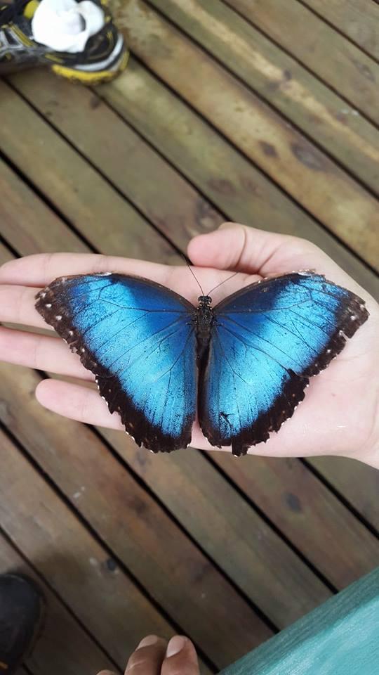 Butterfly Garden - Ricozz Tours.jpg