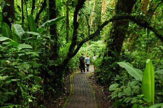 selvatura_trails[1].jpg