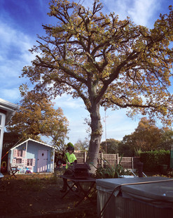 Tree reductions