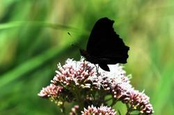 Fauna i flora (38)