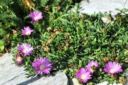 Fauna i flora (90)