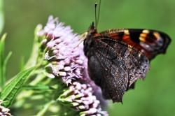 Fauna i flora (45)