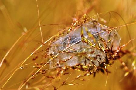 Fauna i flora (92)