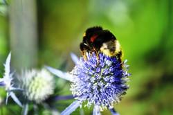 Fauna i flora (85)