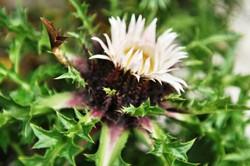 Fauna i flora (74)