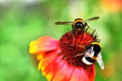 Fauna i flora (72)