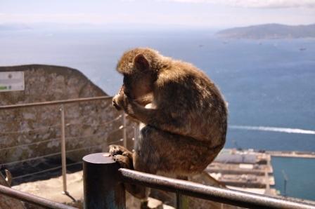 Gibraltar (95)