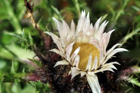 Fauna i flora (80)