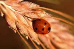 Fauna i flora (125)