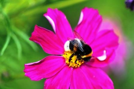 Fauna i flora (10)