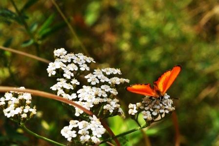 Fauna i flora (126)