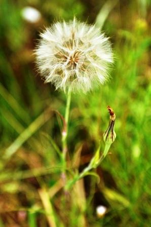 Fauna i flora (112)