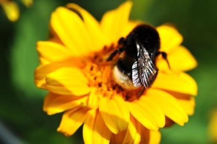 Fauna i flora (83)