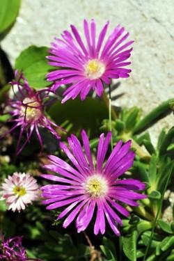 Fauna i flora (7)