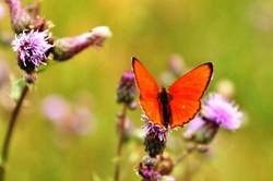 Fauna i flora (118)