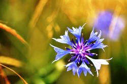 Fauna i flora (100)