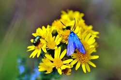 Fauna i flora (89)