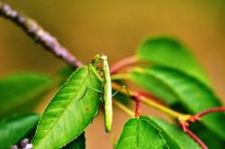 Fauna i flora (16)