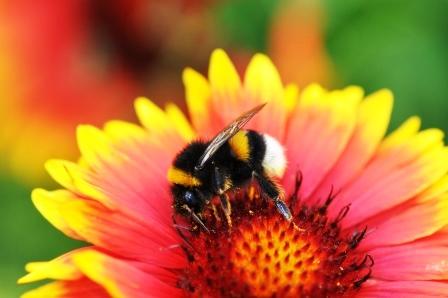 Fauna i flora (110)