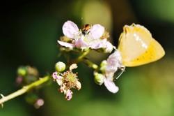 Fauna i flora (15)