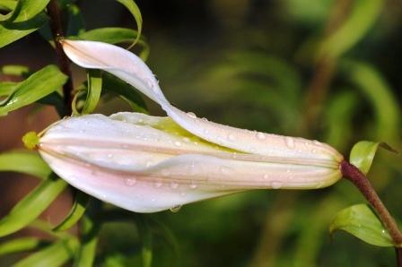 Fauna i flora (114)
