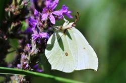 Fauna i flora (31)