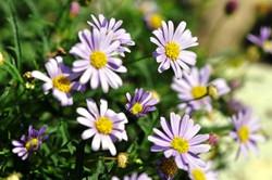 Fauna i flora (9)