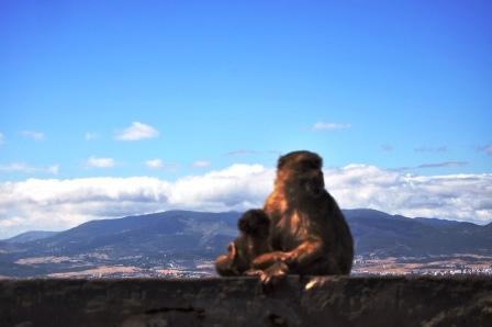 Gibraltar (98)