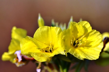 Fauna i flora (116)