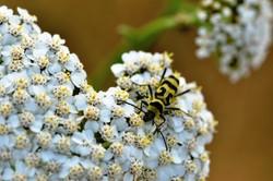 Fauna i flora (102)