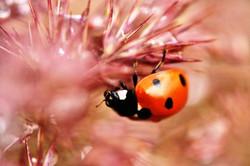 Fauna i flora (30)