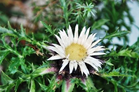 Fauna i flora (69)