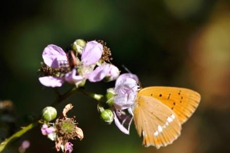 Fauna i flora (17)