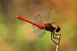 Fauna i flora (25)
