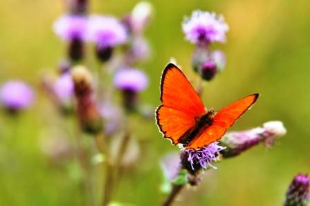 Fauna i flora (122)