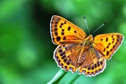 Fauna i flora (41)