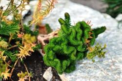 Fauna i flora (70)
